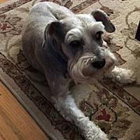 Adopt A Pet :: Milo - Princeton, KY