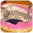 Photo 2 - American Shorthair Kitten for adoption in Cuyahoga Falls, Ohio - Claude