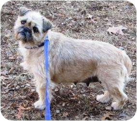 Terrier (Unknown Type, Small) Mix Dog for adoption in Bloomfield, Connecticut - Beaker
