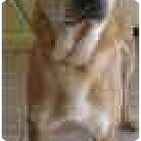 Adopt A Pet :: Chip - Bethesda, MD