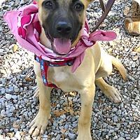 Adopt A Pet :: Hazel ADOPTION PENDING - Sacramento, CA