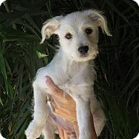 Adopt A Pet :: Margo - Scottsdale, AZ