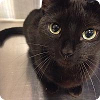Adopt A Pet :: Nikita - Muncie, IN