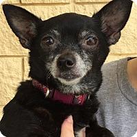 Adopt A Pet :: DeRon - Orlando, FL