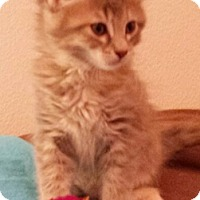 Adopt A Pet :: Jellybean - North Highlands, CA