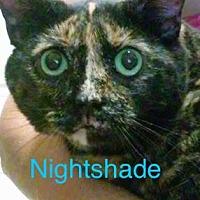 Domestic Mediumhair Cat for adoption in Satellite Beach, Florida - Nightshade