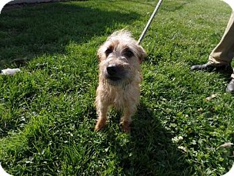 Terrier (Unknown Type, Medium) Mix Dog for adoption in Crown Point, Indiana - Handsome