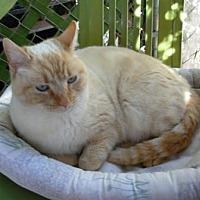 Adopt A Pet :: Rosie - Calimesa, CA
