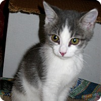 Adopt A Pet :: Allie - Fort Wayne, IN