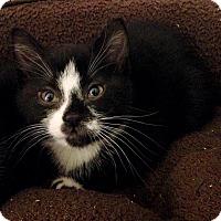 Adopt A Pet :: Cannoli - River Edge, NJ