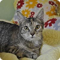 Adopt A Pet :: ANNA ! (Pet Supermarket) - New Smyrna Beach, FL