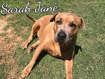 Pit Bull Terrier Mix Dog for adoption in Mobile, Alabama - Sarah Jane