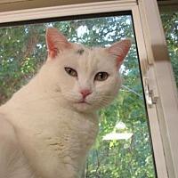 Adopt A Pet :: Katrina - Durand, WI