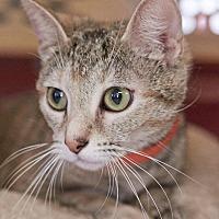 Adopt A Pet :: Sage - Huntsville, AL
