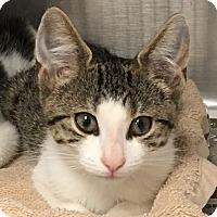 Adopt A Pet :: Molly - East Brunswick, NJ