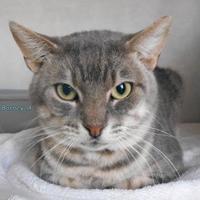 Adopt A Pet :: Barn Cat A - Oskaloosa, IA