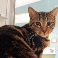 Adopt A Pet :: Wally - Vienna, OH