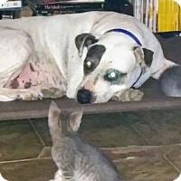 Adopt A Pet :: TuShelle - Grayson, LA
