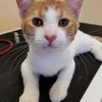 Adopt A Pet :: Billy Bob - Baltimore, MD