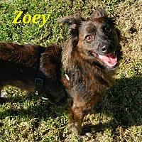 Adopt A Pet :: Zoey - El Cajon, CA