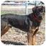 Photo 3 - Rottweiler Mix Dog for adoption in Austin, Minnesota - Cortez