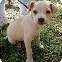 Adopt A Pet :: Jumper - Plainfield, CT