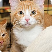 Adopt A Pet :: Merle - Irvine, CA