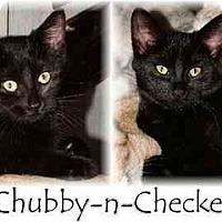 Adopt A Pet :: Chubby and Checker - Proctor, MN