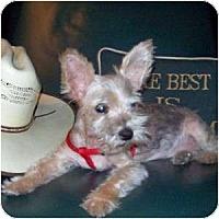 Adopt A Pet :: Keelan - Dartmouth, MA