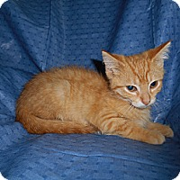 Adopt A Pet :: Ron - Richland, MI