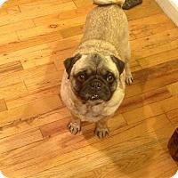 Adopt A Pet :: Jerome - Eagle, ID