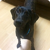 Adopt A Pet :: Rolland in CT - Manchester, CT