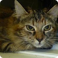 Adopt A Pet :: Ruthie - Hamburg, NY