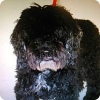 Adopt A Pet :: Waa Waa harmed cause he barked - Corona, CA