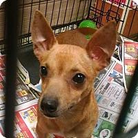 Adopt A Pet :: Beru - Ringoes, NJ