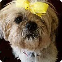 Adopt A Pet :: Chloe - Longview, TX