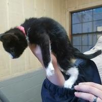 Adopt A Pet :: Milley - Amory, MS