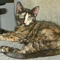 Adopt A Pet :: Mitzi - Fort Pierce, FL