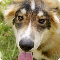 Adopt A Pet :: Alex - Clearwater, FL