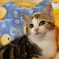 Adopt A Pet :: Malachi - Berlin, CT