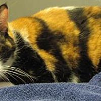 Adopt A Pet :: Katie - Oak Ridge, TN