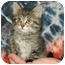 Photo 3 - Domestic Mediumhair Kitten for adoption in Muldrow, Oklahoma - ZOIE