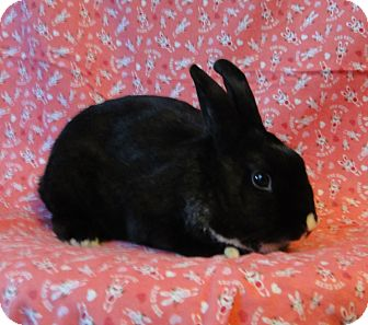 Dutch Mix for adoption in Los Angeles, California - Bond