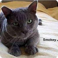 Adopt A Pet :: Smokey Joe - Portland, OR