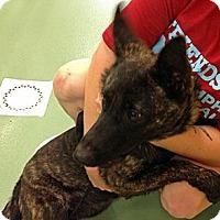 Adopt A Pet :: Zetta in TN - Jamestown, CA