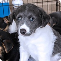 Adopt A Pet :: JOHN - Fort Worth, TX
