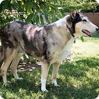 Adopt A Pet :: Gracie - Riverside, CA