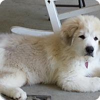 Adopt A Pet :: Maggie - Chesterfield, VA
