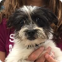 Adopt A Pet :: Casper - Orlando, FL