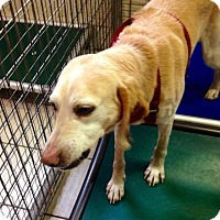 Adopt A Pet :: RILEY - Coudersport, PA